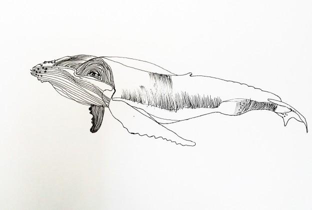 Líneas cétaceas 2, Whale lines 2, tinta china sobre papel china ink on paper, 48 x 33.1 2016