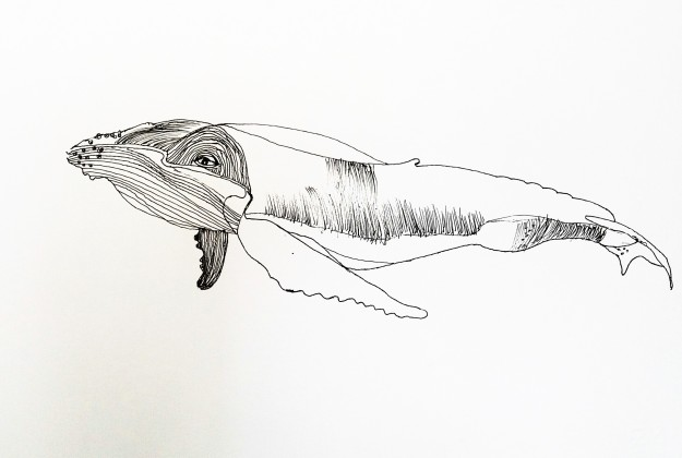 Líneas cétaceas 2, Whale lines 2, tinta china sobre papel china ink on paper, 48 x 33.1 2016